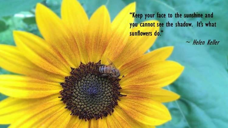 Sunflower - Keller